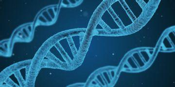 Mutace genu BRCA1,2 = vysoké riziko onemocnění rakovinou prsu a vaječníků